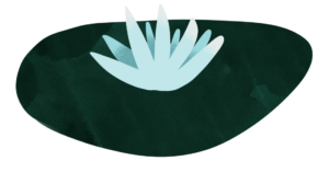 Illustration of a lilypad with a white flower